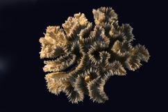 corals-928512_1280