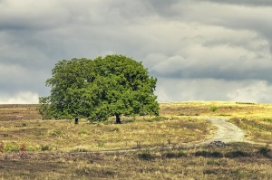 two-trees-1193087_640